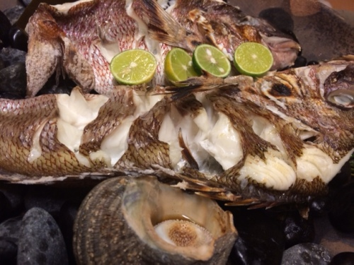 Snapper and sea snails